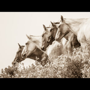 A photograph of horses