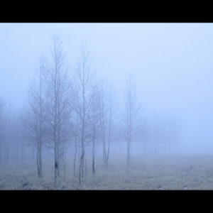 Photograph of trees in the mist